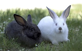 Preview wallpaper Two rabbits, black and white