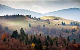 Ukraine, Carpathes, forêt, arbres, brouillard, matin
