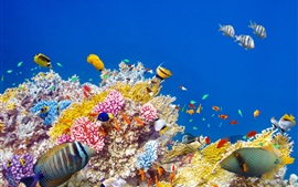 Preview wallpaper Underwater world, coral, tropical fishes, colorful