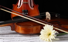Preview wallpaper White gerbera, violin