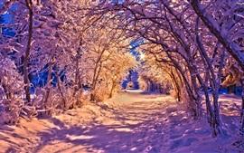 Зима, парк в ночное время, снег, деревья, дорога, огни