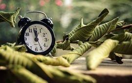 Preview wallpaper Alarm clock, leaves