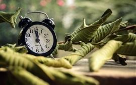 目覚まし時計、葉