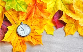 Autumn maple leaves and pocket watch