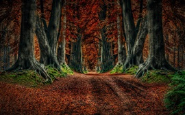 Preview wallpaper Autumn nature, road, trees, leaves