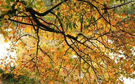 Preview wallpaper Autumn riverside, tree, twigs, yellow leaves