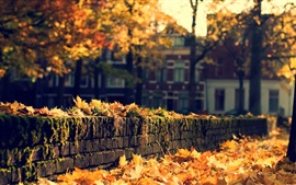 Preview wallpaper Autumn, town, yellow leaves, trees, sunshine