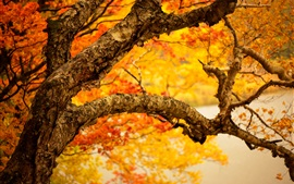 Autumn tree trunk, yellow leaves