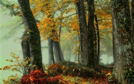 Beautiful autumn, forest, trees, fog, dawn