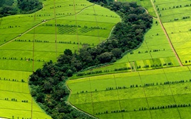 Preview wallpaper Beautiful green fields top view