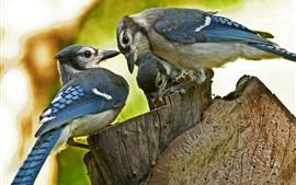 壁紙のプレビュー 青い羽の鳥、切り株