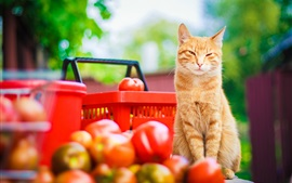 Cat look tomatoes