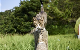 Preview wallpaper Cat walk on the fence