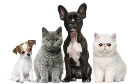 Cats and dogs, white and black