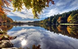 Дайнингер Weiher, Германия, озеро, вода отражение, деревья, осень