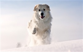 Preview wallpaper Dog running in thick snow, winter