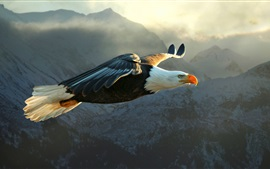 Eagle flying, wings, sky