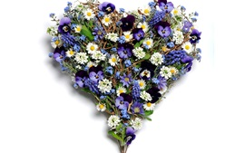 Flowers love heart, pansy, chamomile, grape hyacinth