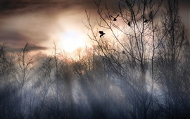Preview wallpaper Forest morning, trees, fog, birds, sunrise