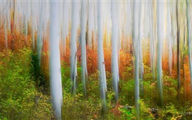 Floresta, árvores, nevoeiro, estilo de arte