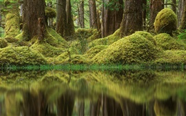 Preview wallpaper Forest, trees, pond, grass, moss, green