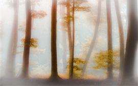 Bosque, árboles, hojas amarillas, niebla, mañana, otoño