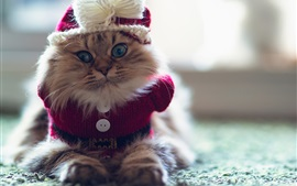 Preview wallpaper Funny kitten, sweater, furry