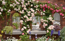 Preview wallpaper Garden pink rose flowers, chamomile, wall