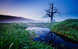 Трава, дерево, река, туман, рассвет, Старый дуб, Польша