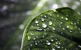 Preview wallpaper Green leaf macro photography, water droplets