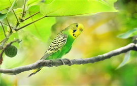 Green parrot, leaves, twigs