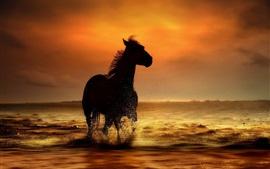 Cavalo, pôr do sol, costa