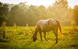 Preview wallpaper Horse eating grass