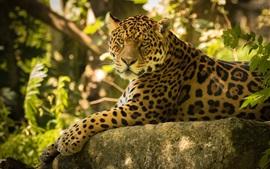 Preview wallpaper Jaguar rest, stones, forest