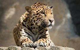 Leopard rest, wooden board