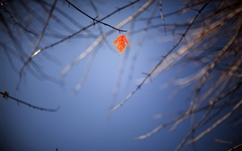 Lonely maple leaf, twigs, autumn