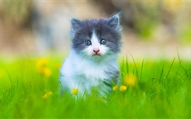 Preview wallpaper Lovely furry kitten in the grass
