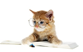 Preview wallpaper Lovely kitten reading a book, glasses