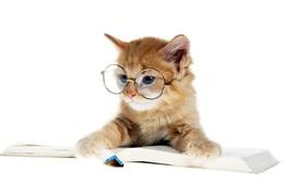 Gatito encantador que lee un libro, vidrios