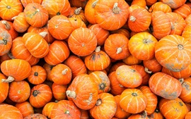 Preview wallpaper Many pumpkin, vegetable close-up