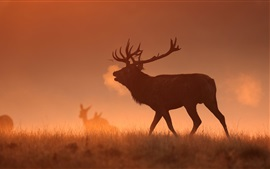 Preview wallpaper Morning, grassland, fog, deer
