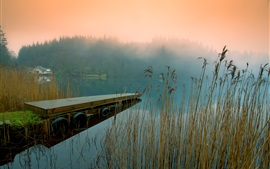 Morning nature, river shore, reeds, trees, house, fog