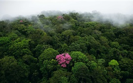 Preview wallpaper Morning top view the forest, fog, tree flowers
