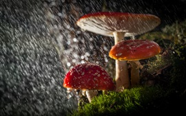 Mushrooms in rain