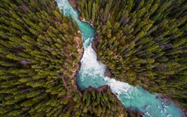 Nature landscape, forest, river, top view