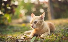 Orange cat rest