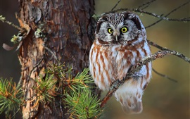Preview wallpaper Owl photography, tree, twigs