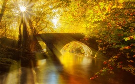 Park, bridge, river, trees, leaves, sun rays