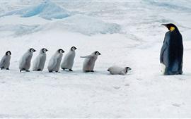Pinguim mãe e bebês pingüim, neve espessa