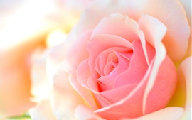 Preview wallpaper Pink rose macro photography, petals, glare, bokeh